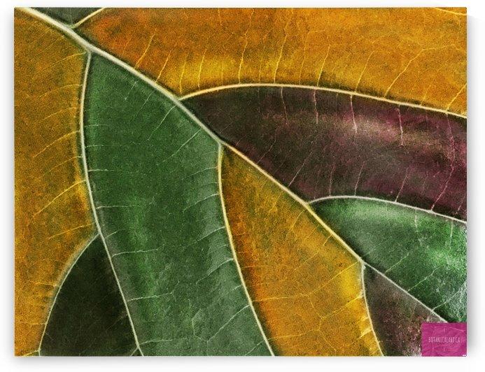 Coloured Leaf by BotanicalArt ca