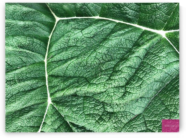 Veined Leaf by BotanicalArt ca