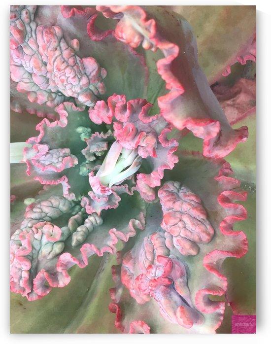 Curvy Cactus by BotanicalArt ca