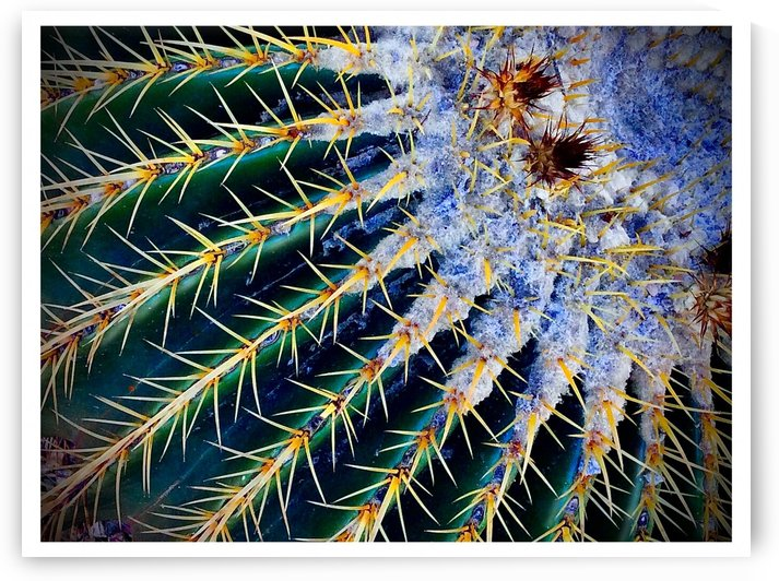 Barrel Cactus Radial Structure by BotanicalArt ca