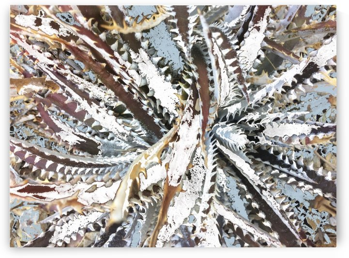 Cactus Arms Abstract by BotanicalArt ca