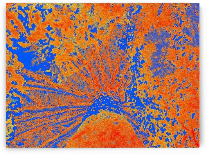 Nature - Araucaria III by Carlos Wood