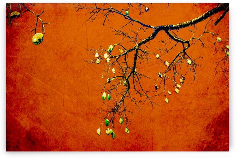 Nature - VIII by Carlos Wood