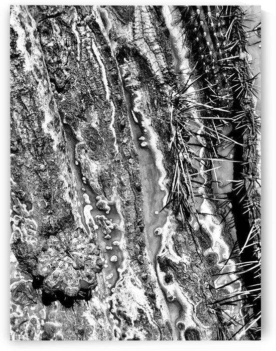 Crusty Cactus Texture by BotanicalArt ca