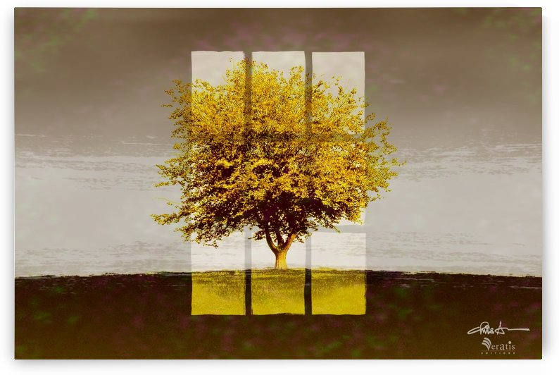 Window on an Amber Tree 3x2 by Veratis Editions