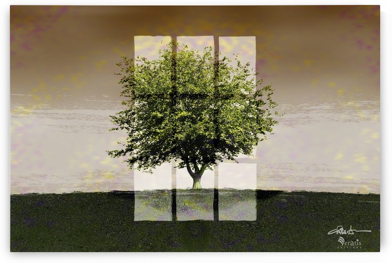 Window on a Green Tree 3x2 by Veratis Editions