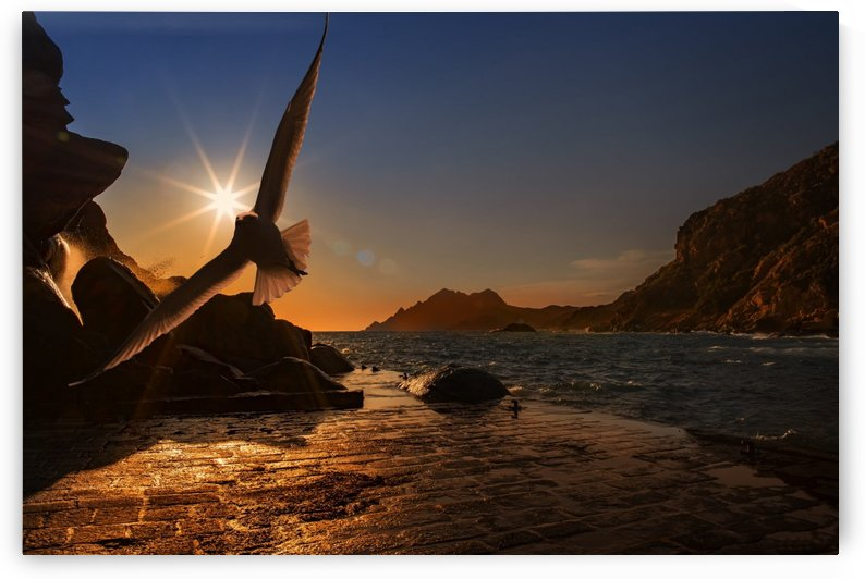 Bird flying near the seashore by Shamudy