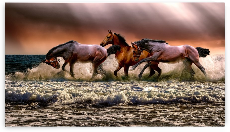 Photo of three galloping horses on body of water by Shamudy