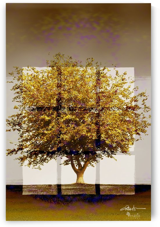 Window2 on an Amber Tree 2x3 by Veratis Editions