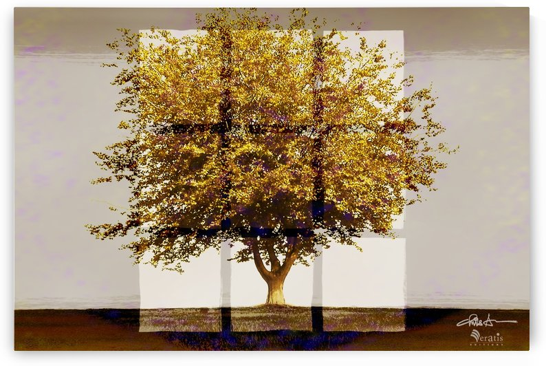 Window2 on an Amber Tree 3x2 by Veratis Editions