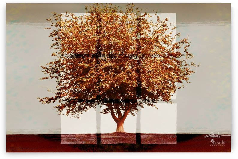 Window2 on Sienna Tree 3x2 by Veratis Editions