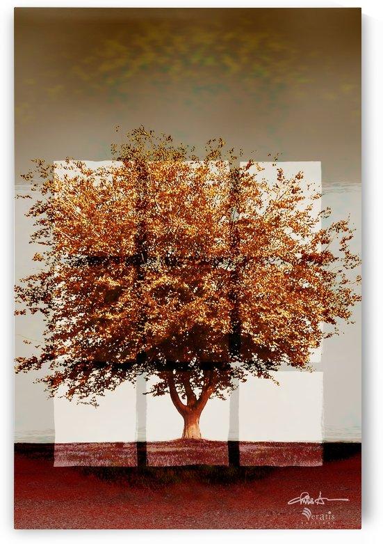Window2 on Sienna Tree 2x3 by Veratis Editions