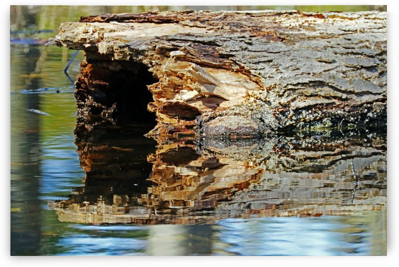 Hollow Log Reflection In Pond by Deb Oppermann