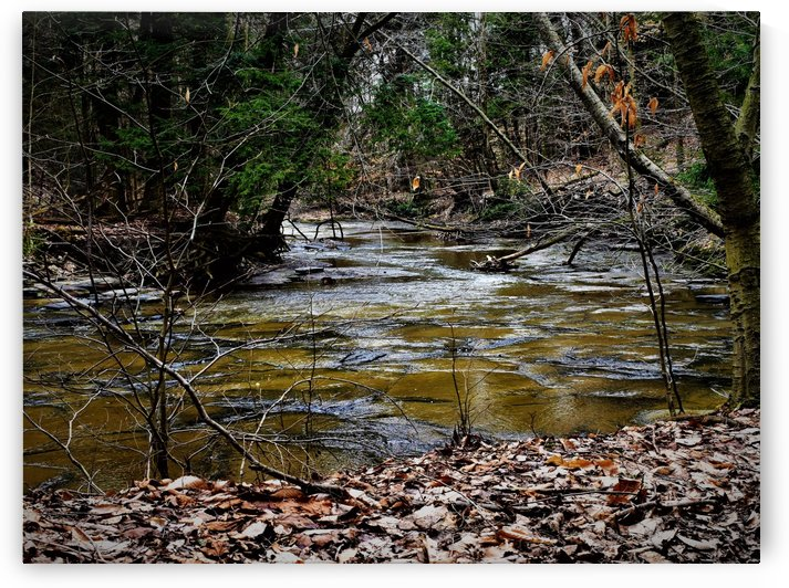 Creek by M Brehm