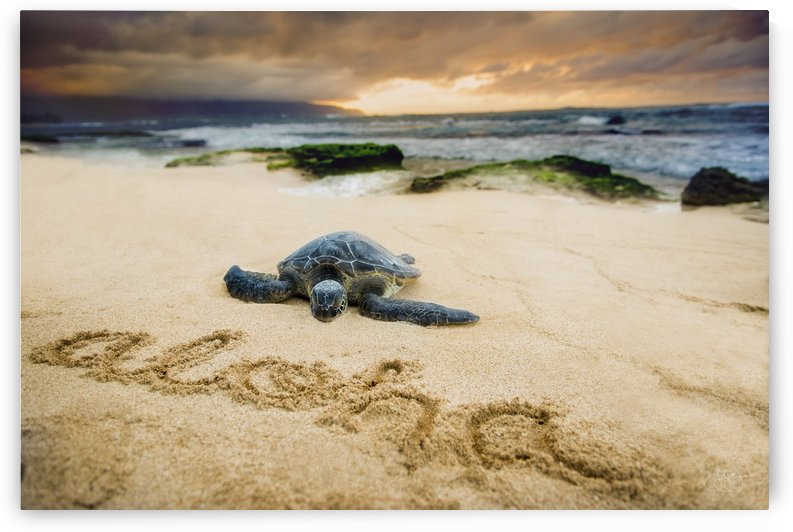 Baby Honu by Jerry Omo jr