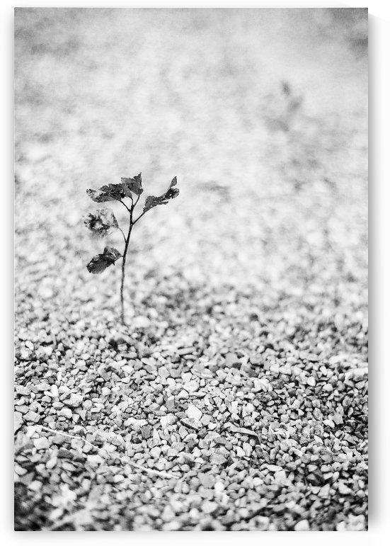 Gravel Plant by Sarah Goldstein