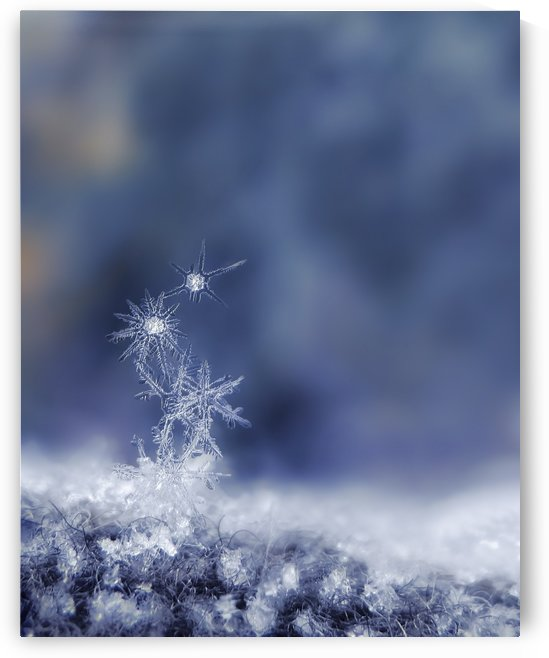 Blue Snowflakes Stacked by Sarah Goldstein