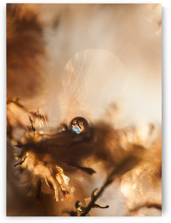 Gold Droplet by Sarah Goldstein