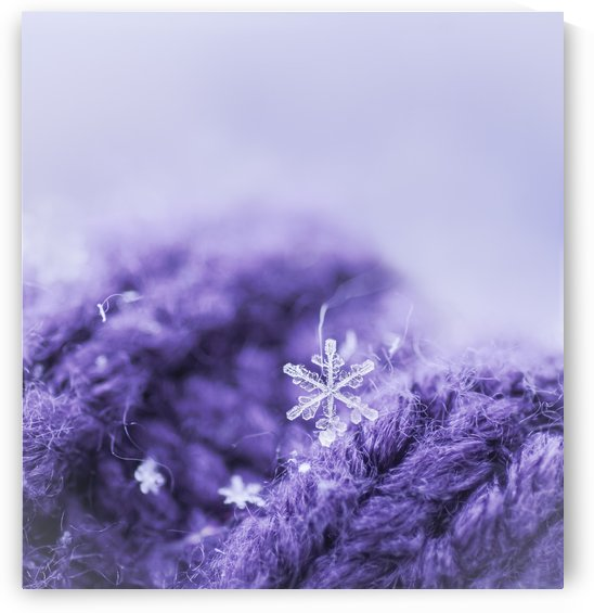 Purple Snowflakes by Sarah Goldstein