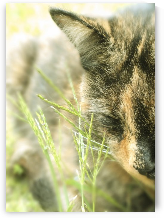 Cat in Grass by Sarah Goldstein