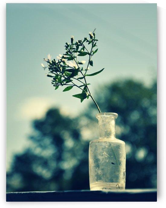 Bottled Leaf by Sarah Goldstein