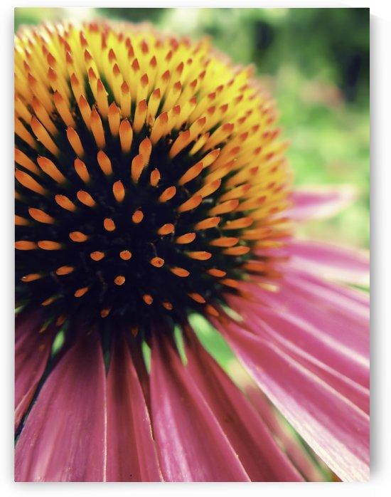 Sharp Flower by Sarah Goldstein
