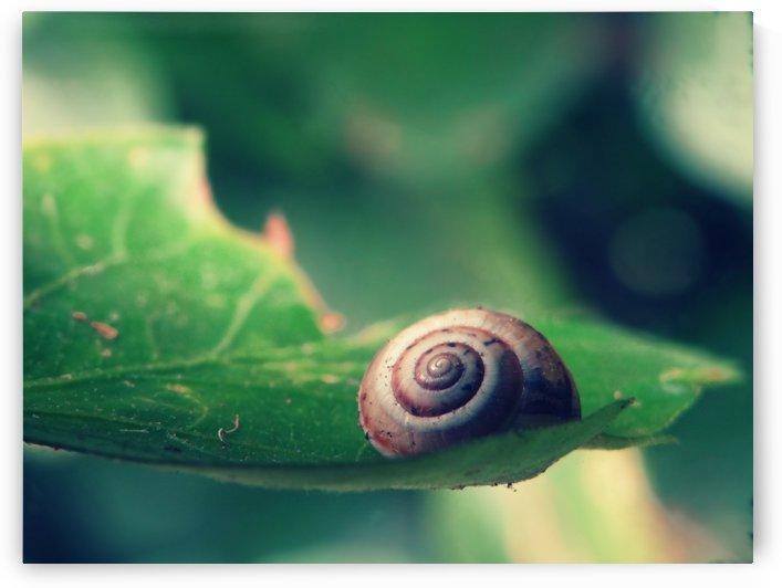 Snail on Leaf by Sarah Goldstein