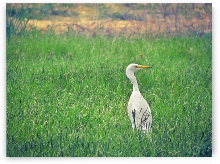 Bird in Paradise by Sarah Goldstein