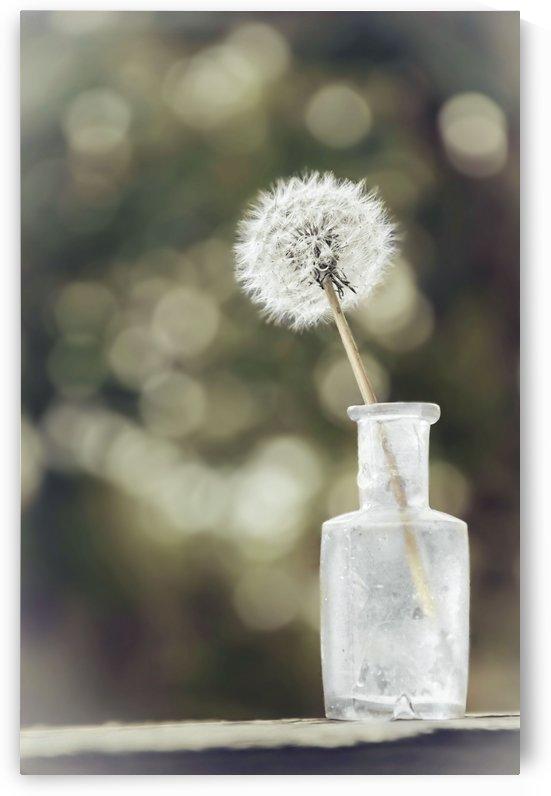 Sepia Dandelion by Sarah Goldstein