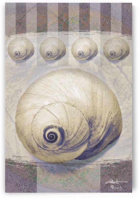 Shark eye Shells on Mauve 2x3 by Veratis Editions