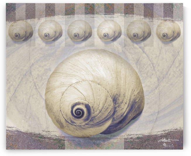 Shark eye Shells on Mauve 6x5 by Veratis Editions