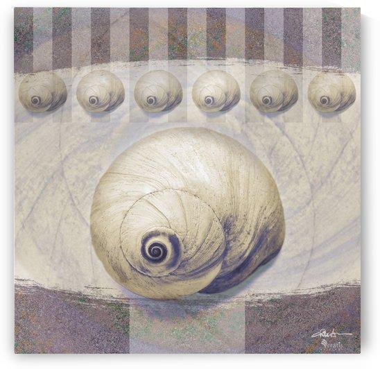 Shark eye Shells on Mauve 1x1 by Veratis Editions