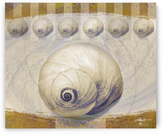 Shark eye Shells on Ochre 6x5 by Veratis Editions