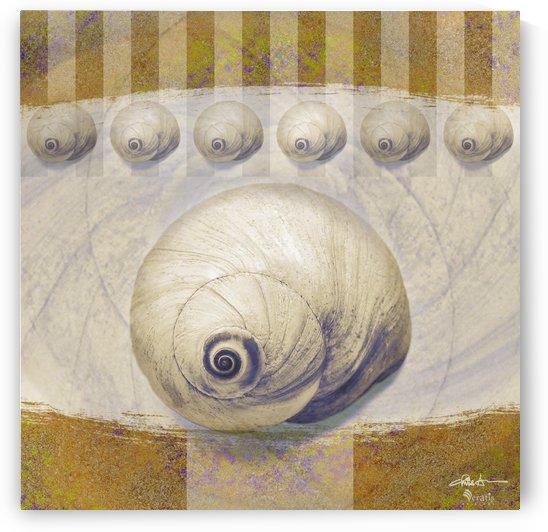 Shark eye Shells on Ochre 1x1 by Veratis Editions