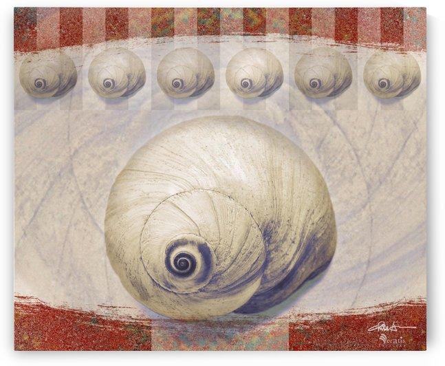 Shark eye Shells on Sienna 6x5 by Veratis Editions