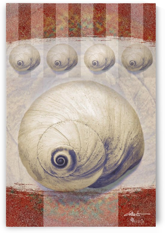 Shark eye Shells on Sienna 2x3 by Veratis Editions