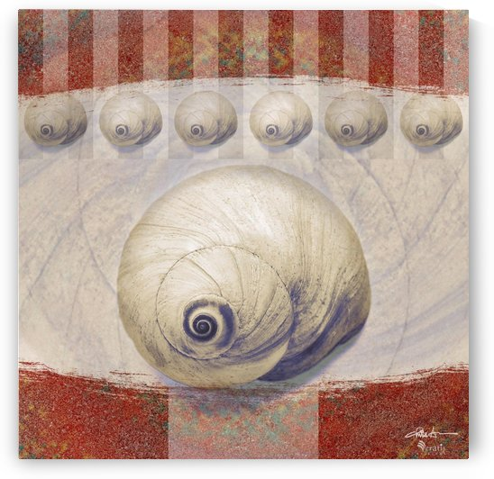 Shark eye Shells on Sienna 1x1 by Veratis Editions