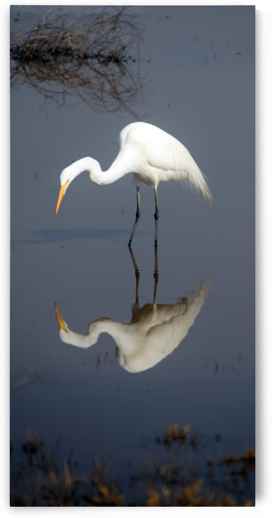 Who Are You White Egret by Frank Wilson