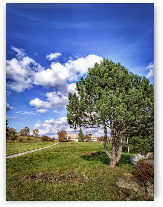 Tree and blue sky with clouds by Michal Dunaj
