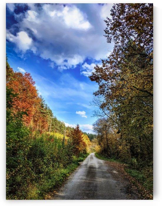 Autumn road by Michal Dunaj