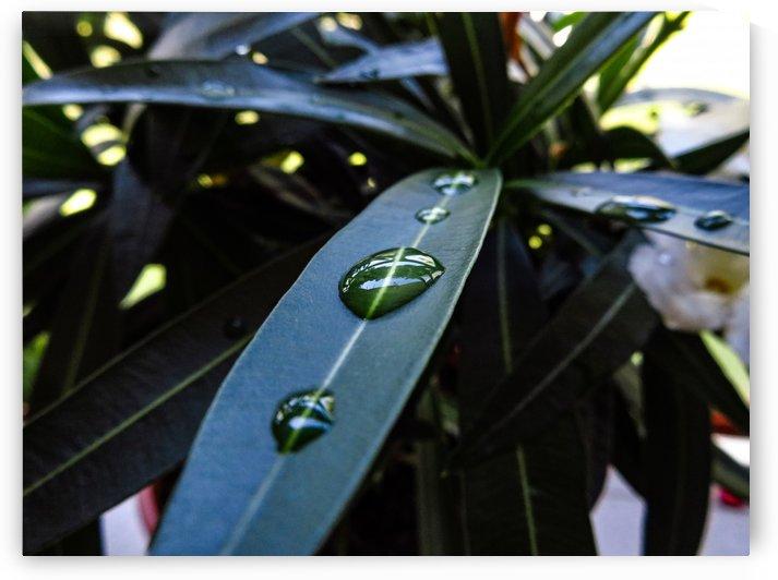 Raindrop on a green leaf by Michal Dunaj
