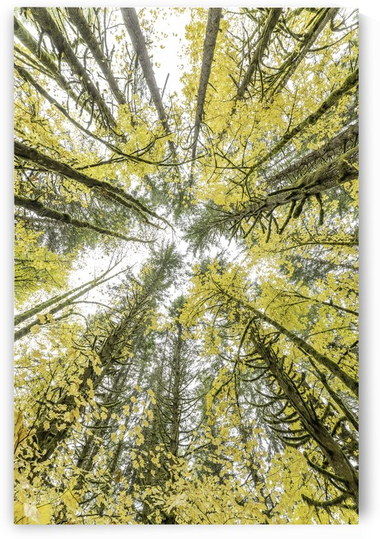 Tillamook Forest by Sebastian Dietl