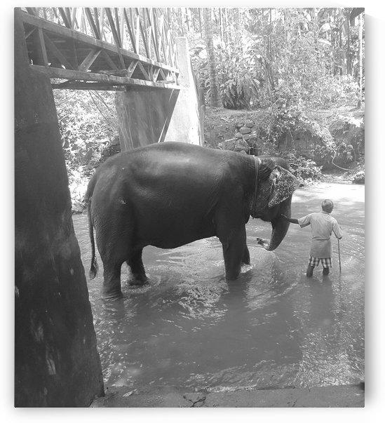 Elephant walk B&W 2 by Gina Lafont