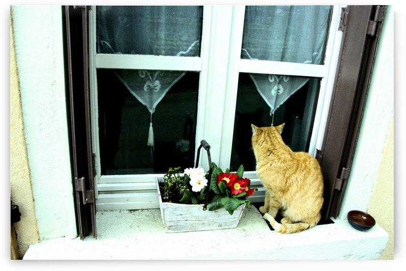 French cat on windowsill 1 by Gina Lafont