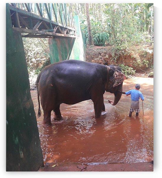 Elephant walk by Gina Lafont