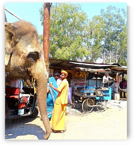 Indian Street life elephant by Gina Lafont