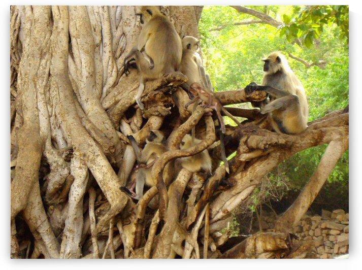 Monkey troupe by Gina Lafont