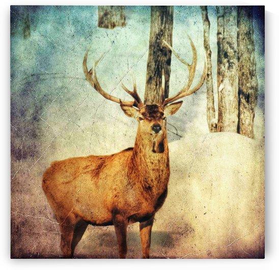 Dans les bois by Guylaine Charest Artiste Photographe
