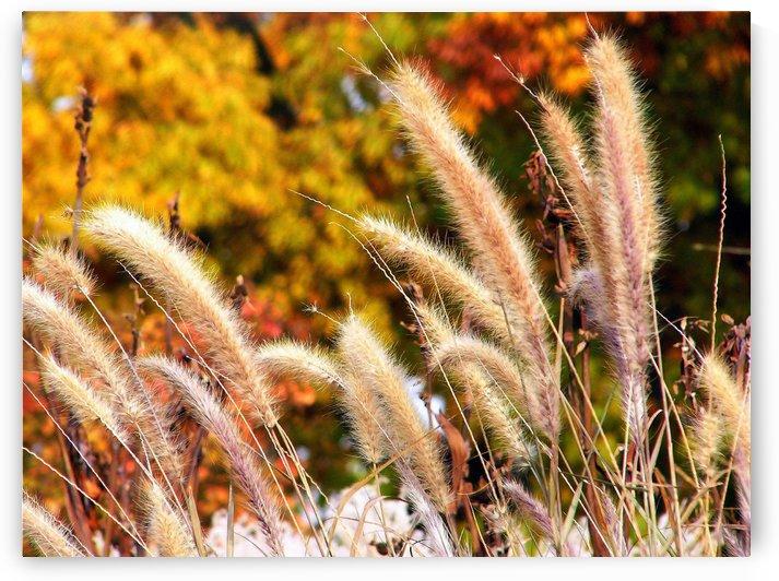 Dancing Grass by Lisa Bates