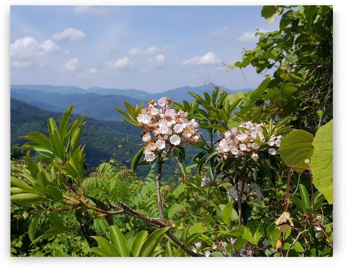 Mountain Paradise by Lisa Bates